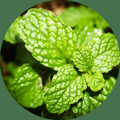 Piante aromatiche da balcone e giardino: disposizione, terriccio, cura e dove acquistarle online