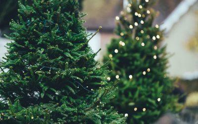 Guida ai migliori alberi di Natale da acquistare online